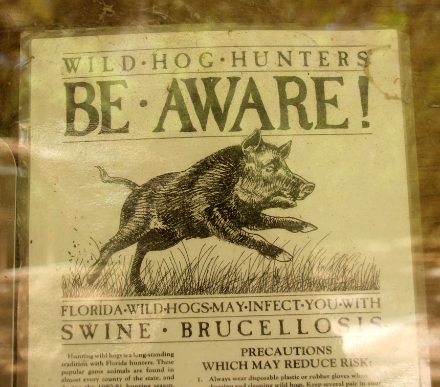 Be-Aware of Wild Hogs