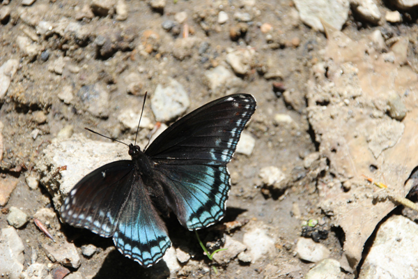 This beautiful butterfly kept us entertained for quite a while.